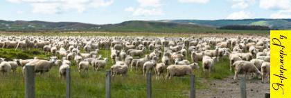 Хороший выбор места под овечью ферму.