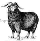 козёл горноалтайской породы