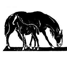 Рассасывание плодов у жеребых кобыл
