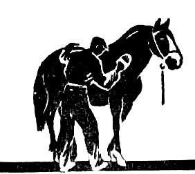 Саркоптоз лошадей