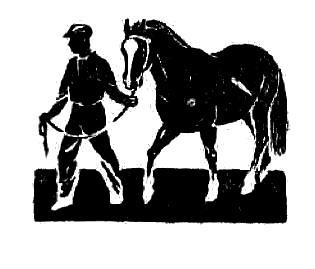 Некробациллез лошадей: клиника и патолого-анатомическая картина