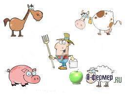 Строение пищеварительной системы у сельскохозяйственных животных. Процесс расщепления корма в пищеварительном тракте.
