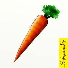 Морковь — агротехника, вредители, хранение