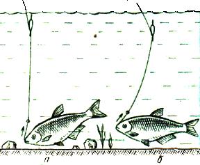 Рисунок двойной поплавок