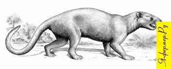 Один из самых древних из предполагаемых предков лошадей — фенакодус