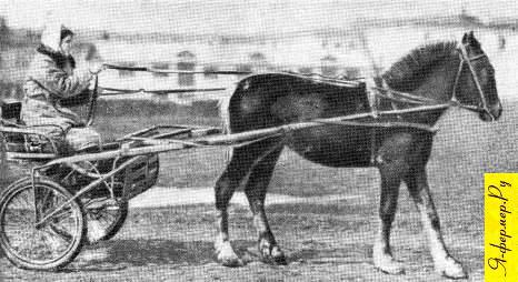 Фистульная лошадь перед работой