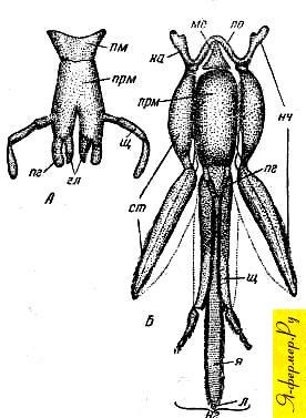 Хоботок у пчёл строение