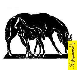 Воспроизводство лошадей основные задачи