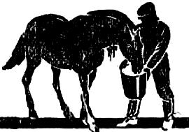 Чем кормят лошадей в Китае