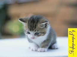 Рождение котят.