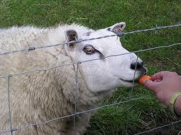 Кормление сельскохозяйственных животных. Чем и как кормить сельскохозяйственных животных