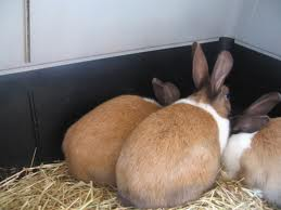 Устройство и оборудование кроликофермы