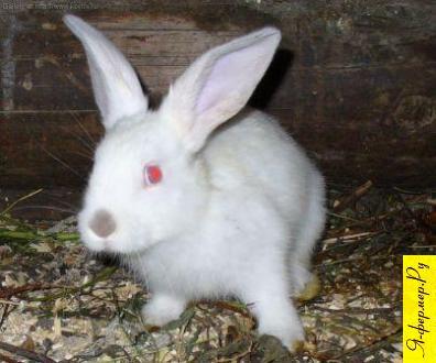 Свободное содержание кроликов, без клеток