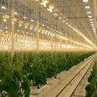 Свет для выращивания растений. Обзор типов ламп