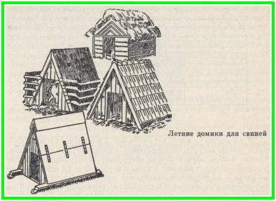 летние домики для свиней