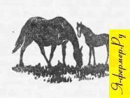 Лошадь с жеребёнком, рисунок
