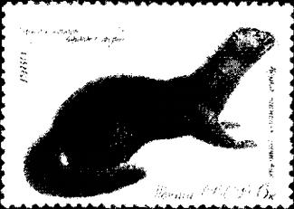 На почтовой марке - норка темно-коричневой окраски