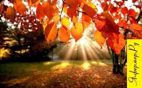 Сад осенью, осенний сад