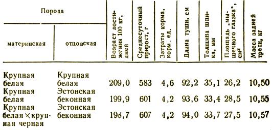 Откормочные и мясные качества помесного молодняка в сравнении с чистопородным при двух- и трехпородном скрещивании