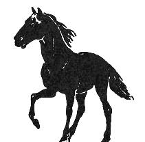 Лошадь печорской породы