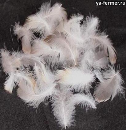 Сколько стоят пух и перо гуся и утки?