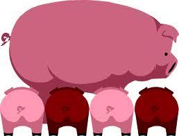 откорм свиней, рисунок