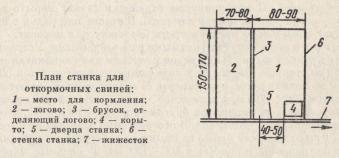 план станка для откормочных свиней