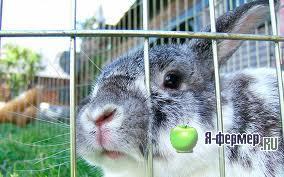 Кормите кроликов сеном