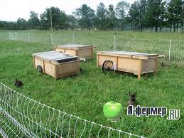 Помещения для кроликов, застройка участка