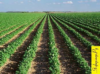Калий для сельскохозяйственных растений