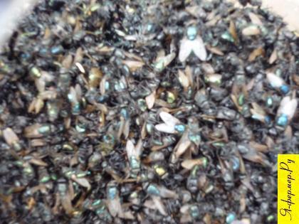 Самодельная мухоловка фото.