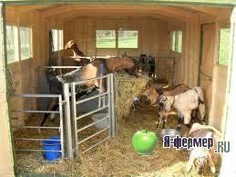 Устройство хлева для коз