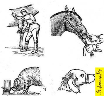 Способы фиксации сельскохозяйственных животных
