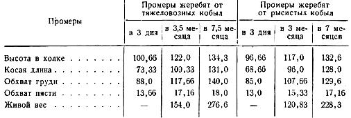 Средние промеры конского молодняка, полученного от случки рысистых и тяжеловозных кобыл с жеребцом Мрамором