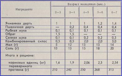 примерный рацион кормление племенных свинок, таблица