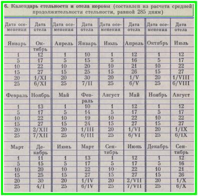 календарь стельности и отёла коровы