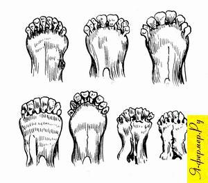 Графический рисунок, который поможет определить возраст козы по состоянию зубов