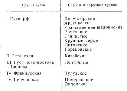 Классификация пород гусей
