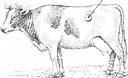 Как правильно отправить в запуск корову?