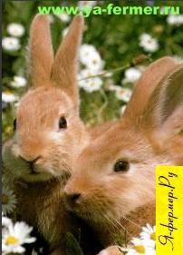 Породы кроликов