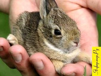 Если крольчиха затаптывает или загрызает крольчат