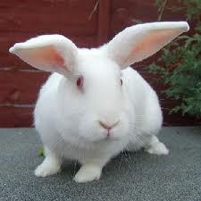 Переработка пуха кроликов в домашних условиях