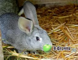 Кроличье хозяйство Шушуновых: опыт содержания кроликов