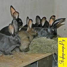 Крольчиха не подпускает самца, что делать?