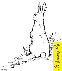 Какой размер ямы для кроликов, технология выращивания кроликов в ямах.