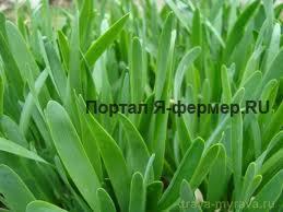 зелень рецепты