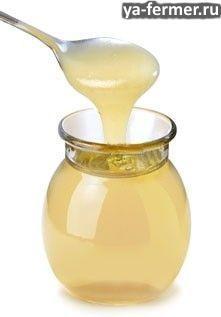 Пчелиное маточное молочко фото.