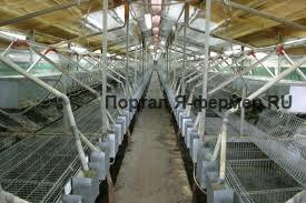 Механизированная кролиководческая ферма фото
