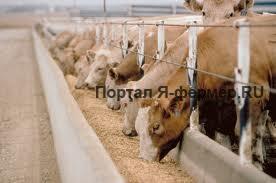 Механизмы на молочной ферме