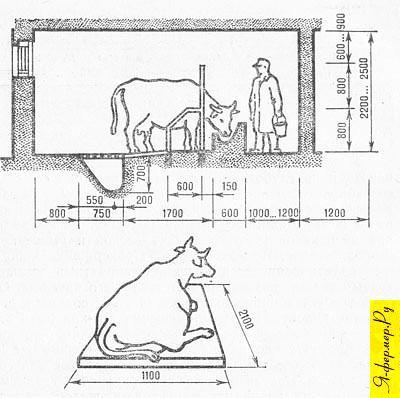 размер место для коровы